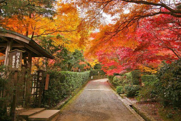 秋の京都 嵯峨野