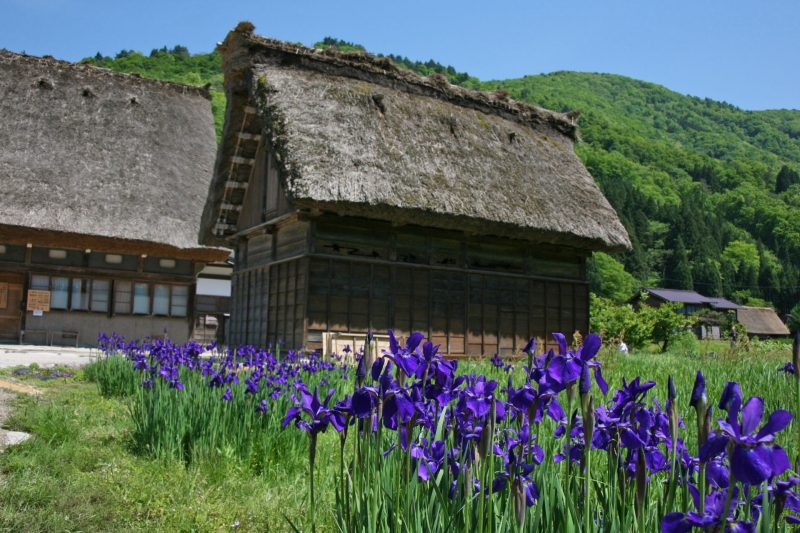 Shirakawago May